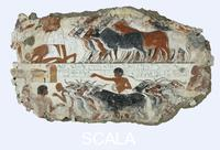 ******** Cattle brought for inspection: fragment of wall painting from the tomb of Nebamun, c.1350BC. Tomb of Nebamun. 18th Dynasty. 1350BC (circa)