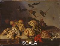 Ast, Balthasar van der (1590-1656) Shells and Fruit