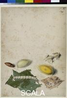 Flegel, Georg (1563-1638) Silkworm in different phases of its development, c. 1610