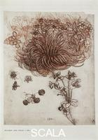 Leonardo da Vinci (1452-1519) Flowers, probable study for the Virgin of the Rocks (facsimile)