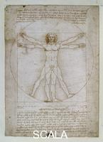 Leonardo da Vinci (1452-1519) Scheme of the proportions of the human body or the Vitruvian man, c. 1490