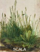 Durer, Albrecht (1471-1528) Das grosse Rasenstueck (Large clump of turf), 1503